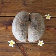 Coco de Mer - die Liebesnuss