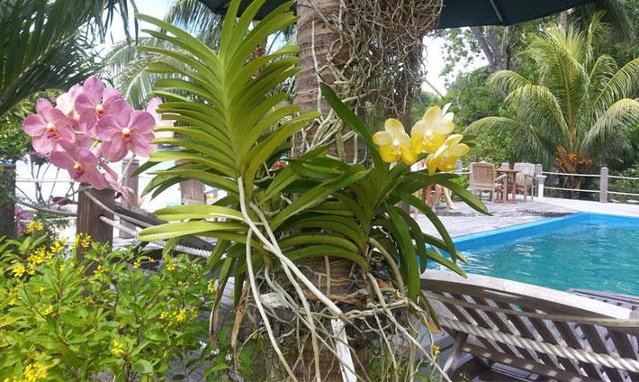 Crown Beach Hotel Garden