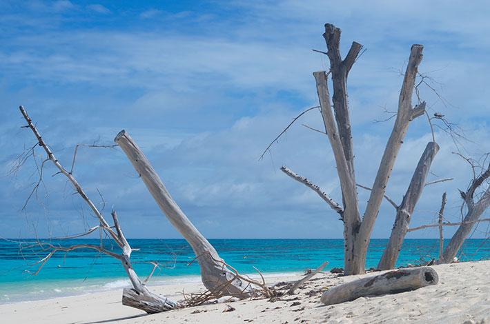 Denis Private Island Beach
