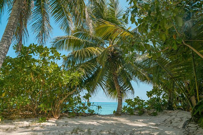 Denis Private Island Ocenview