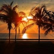 Kokospalmen - Baum des Lebens der Seychellen
